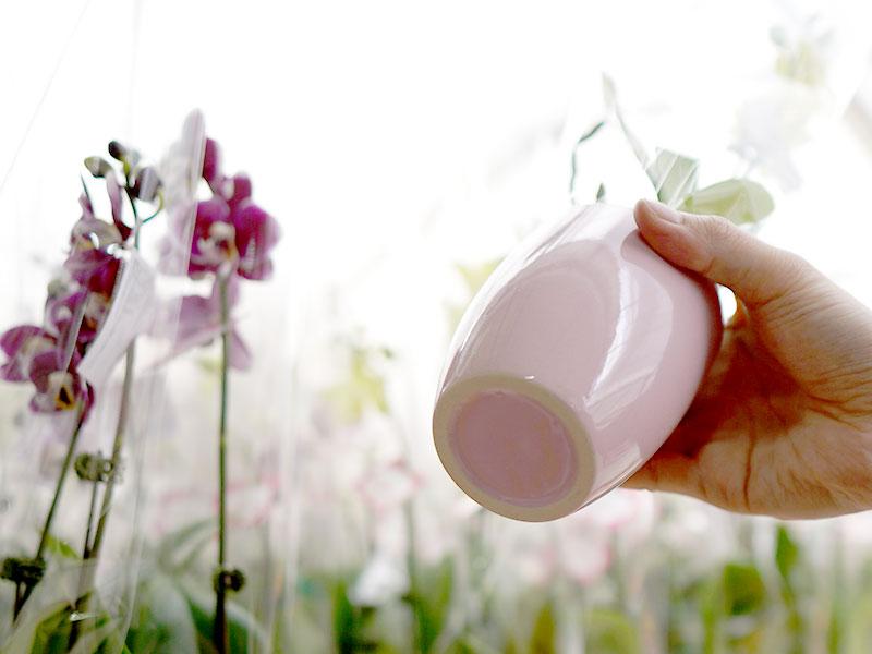 胡蝶蘭の水やり方法と頻度